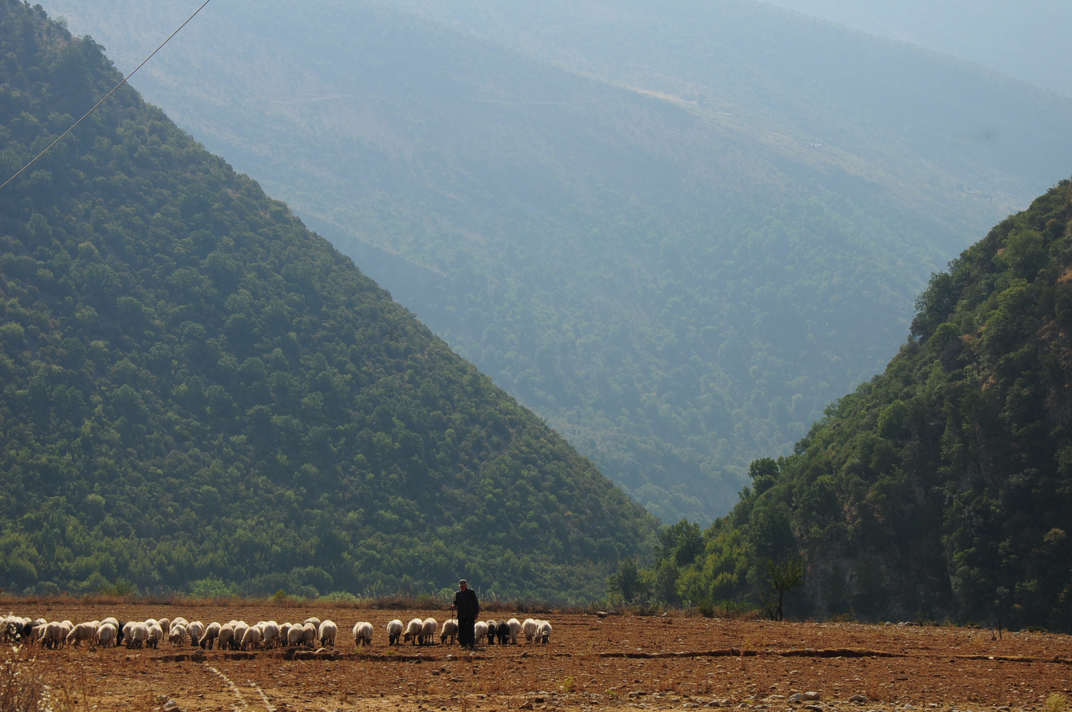Shepherd with sheep in the Vjosa Valley