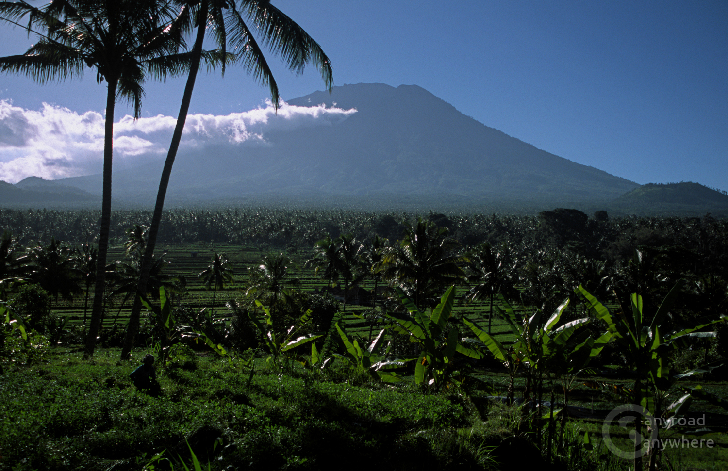 Endless banana plantations in East Bali with Mount Agung