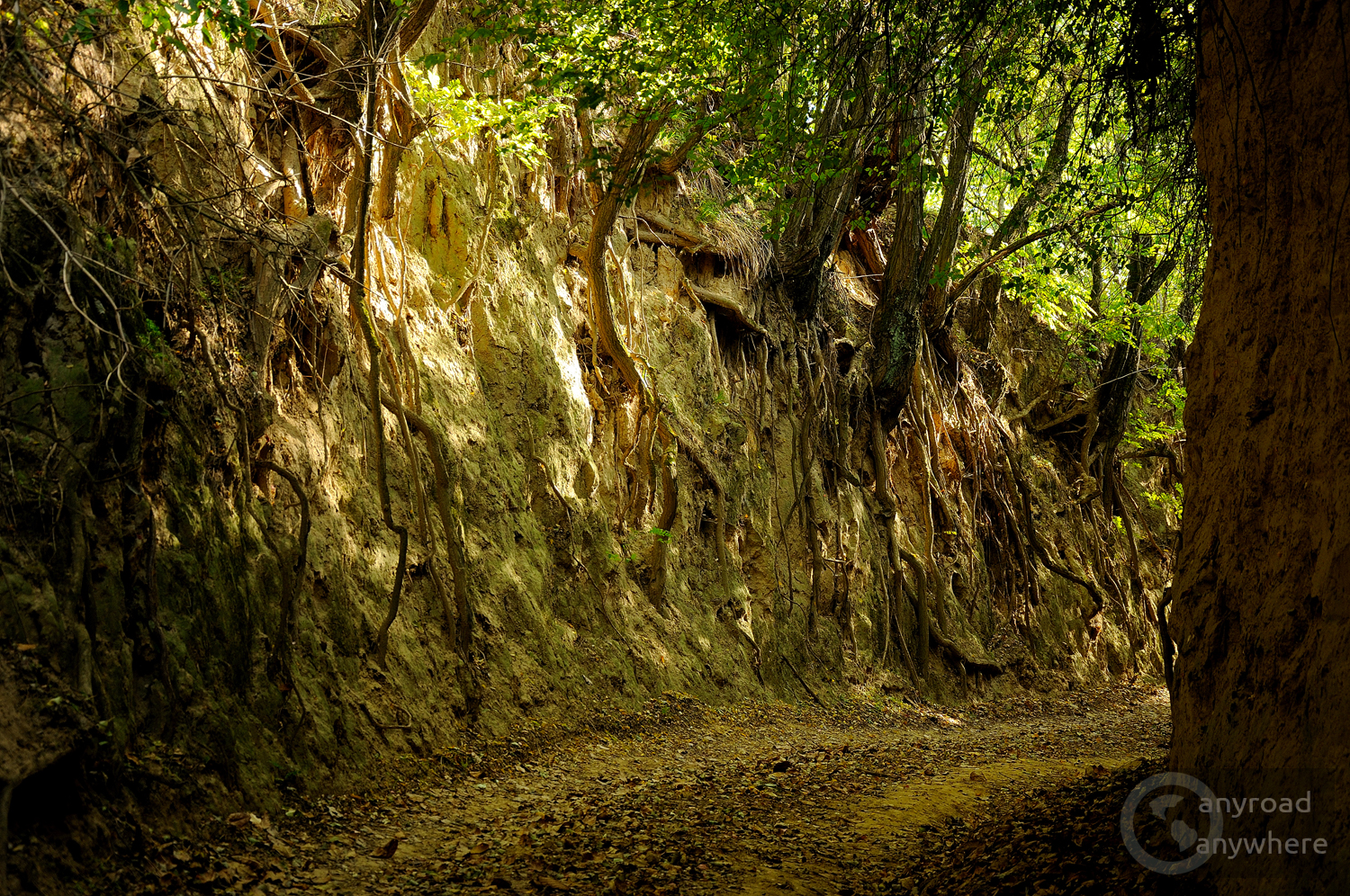 Roots of the trees embrace the high walls of the ancient road