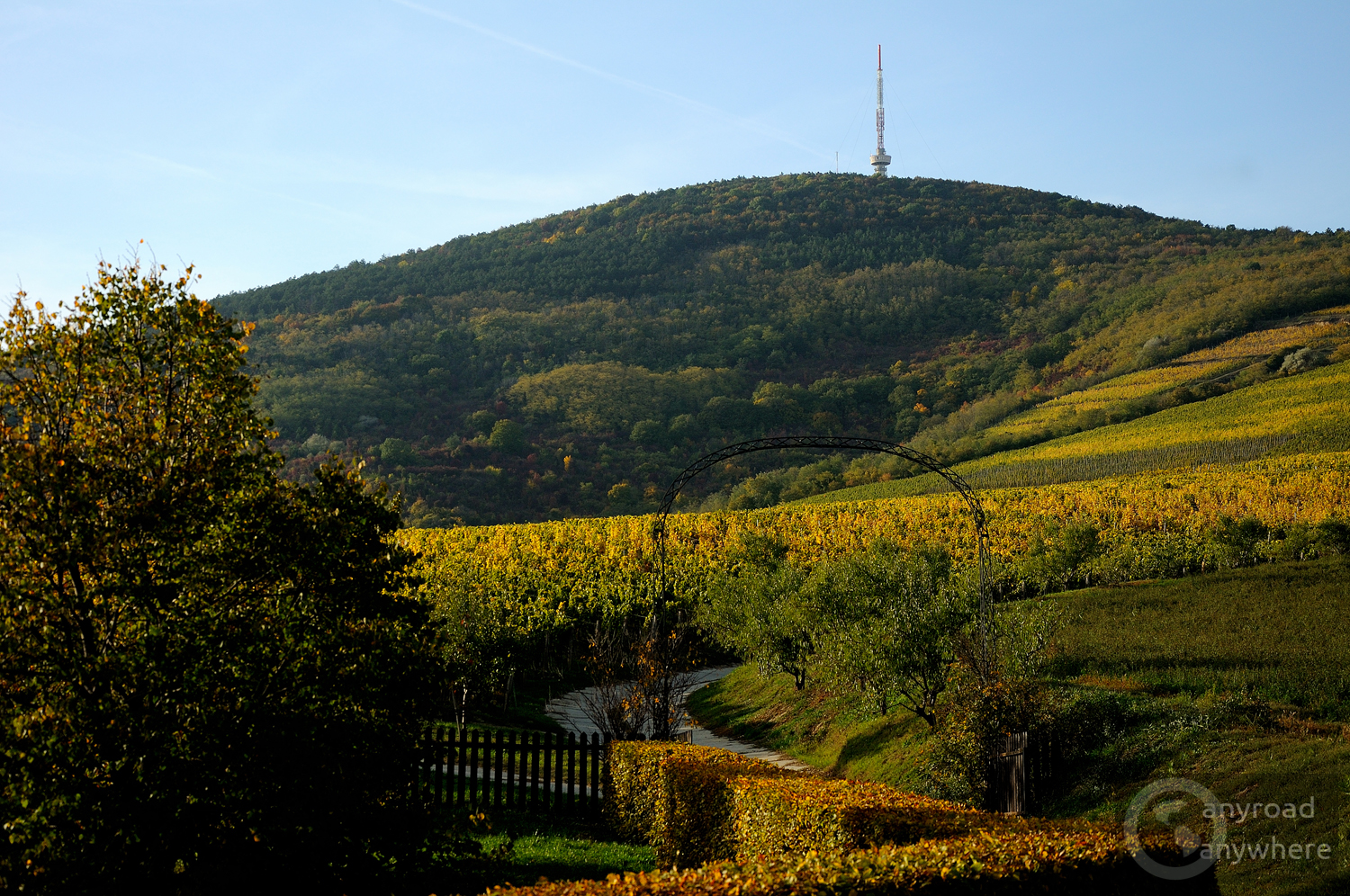 Vineyards at the foot of Tokaj Hill