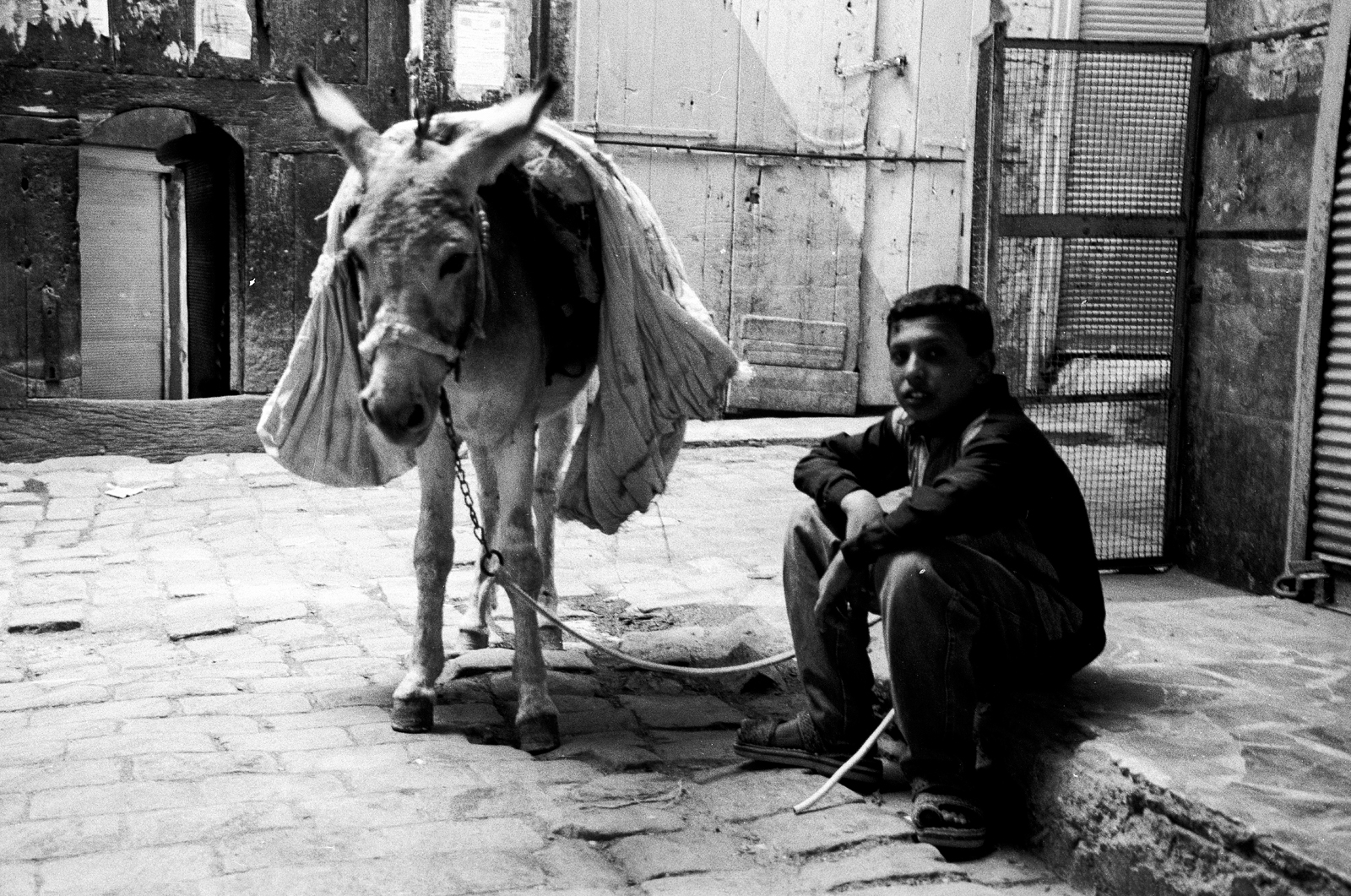 A young boy and his donkey take a break in the old town of Aleppo