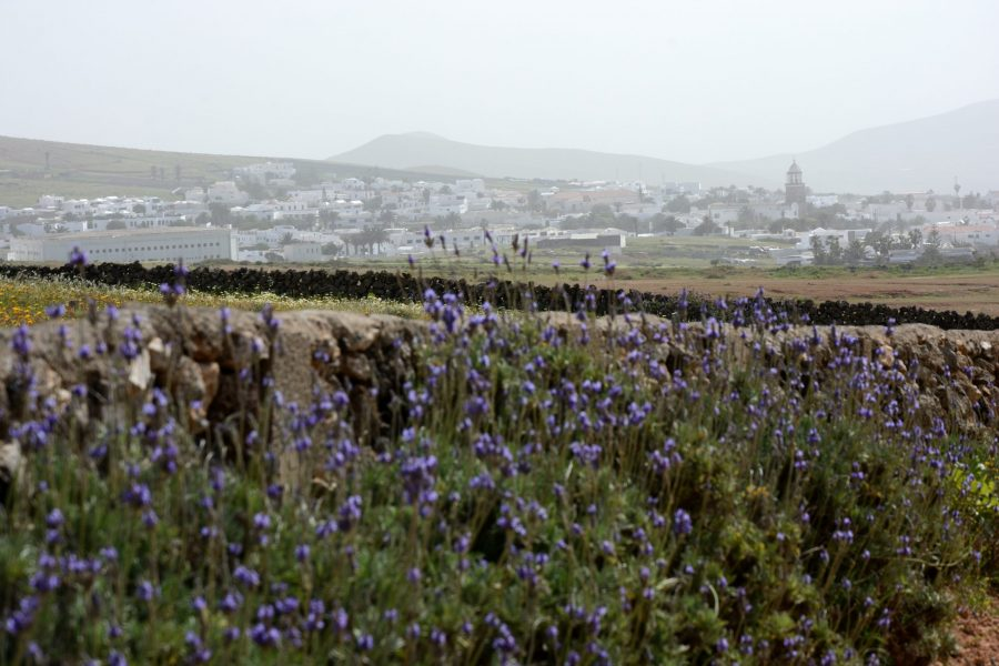 The old capital and lavenders